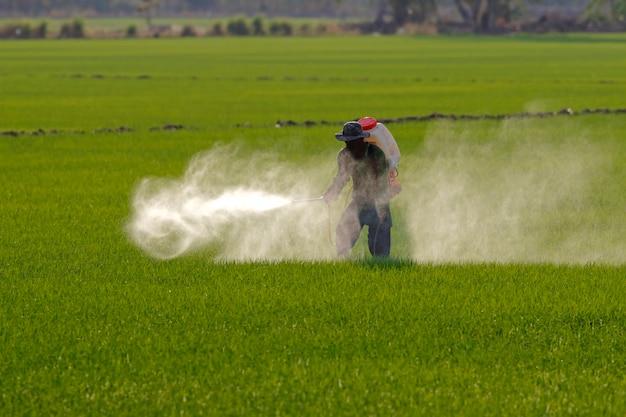 Granjero rociando pesticidas en el campo de arroz