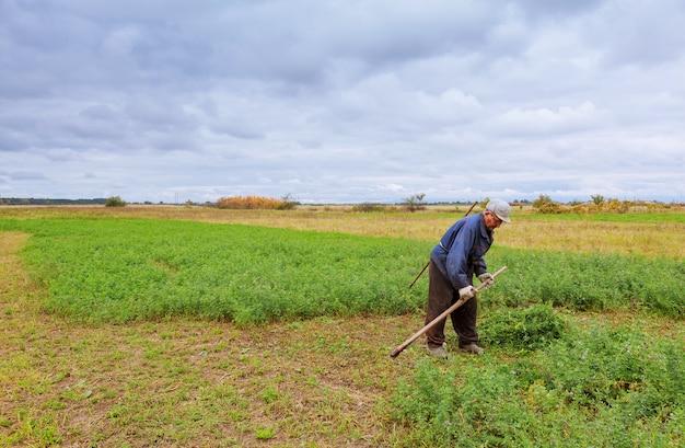 Granjero en ropa vieja corta hierba en el campo