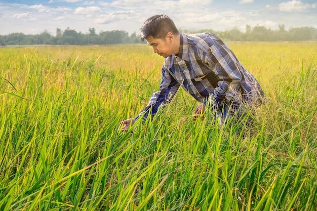 Granjero de sexo masculino asiático trabaja en campo de arroz con un bonito cielo