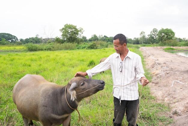 Granjero tailandés con su búfalo en campo de hierba verde en campo