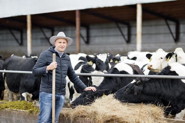 Granjero está trabajando en la granja con vacas lecheras