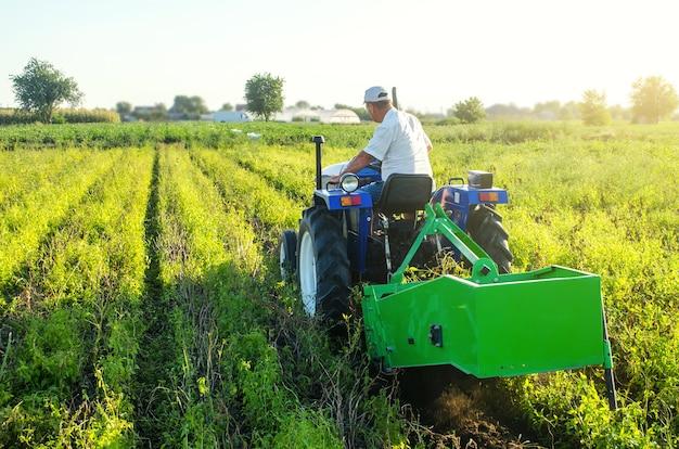 Un granjero en un tractor cruza el campo y extrae patatas. extraiga los tubérculos a la superficie.