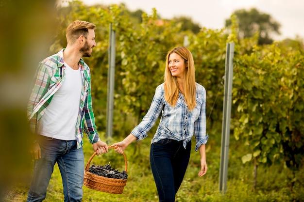 Granjeros de hombre y mujer cosechando uvas en un viñedo