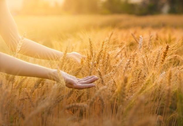 El grano de cebada se usa para la harina en la mano
