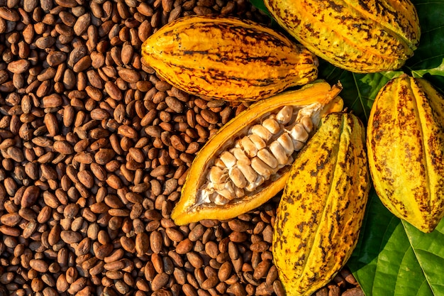 Granos de cacao aromáticos como fondo, granos de cacao y frutas de cacao en madera.