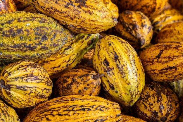 Granos de cacao y vaina de cacao sobre una superficie de madera