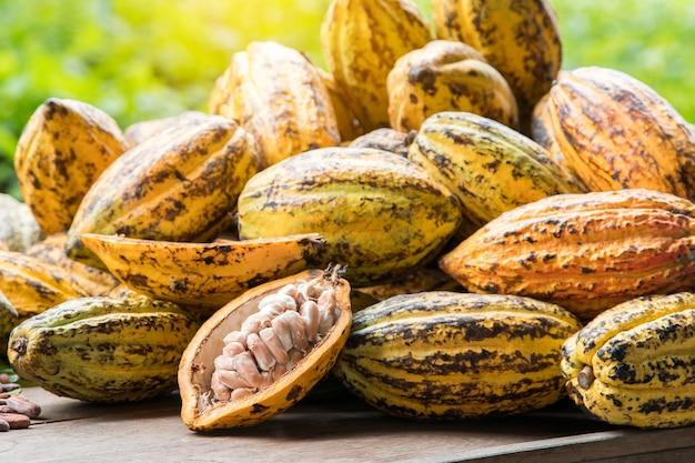Granos de cacao y la vaina de cacao en una superficie de madera.