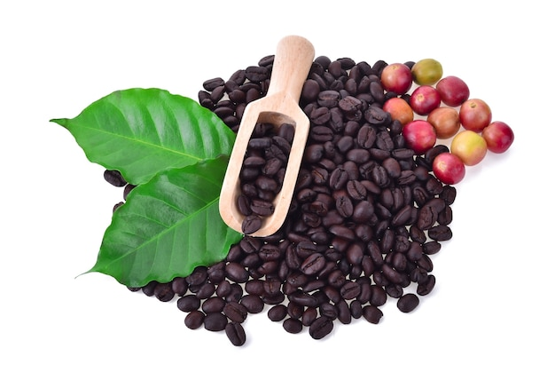 Granos de café y café maduro aislado en blanco.