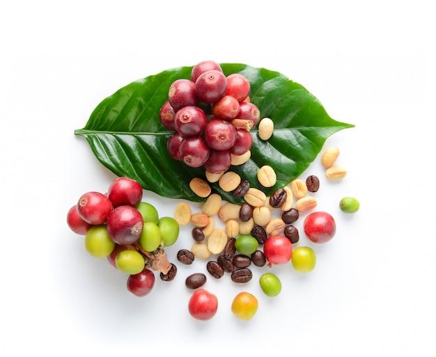 Granos de café y hojas