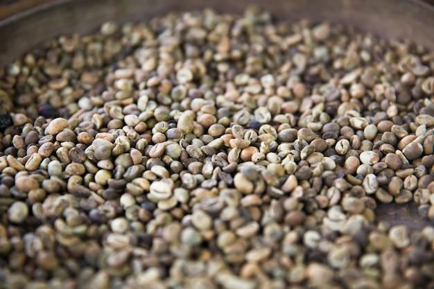 Granos de café kopi luwak crudos en una granja de café