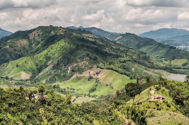 Granos de café verde niebla granja agrícola colombia