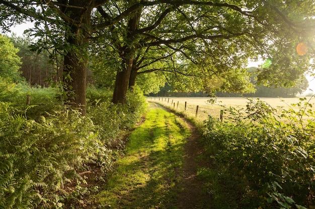 Green farm road en los países bajos durante el amanecer