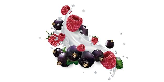 Grosellas negras y frambuesas en salpicaduras de leche o yogur aislado sobre fondo blanco.