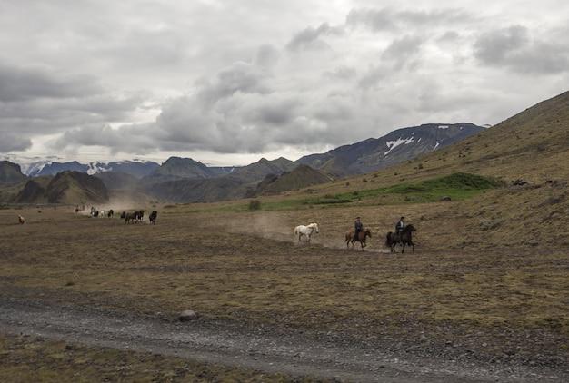 Un grupo de caballos galopando alrededor de landmannalaugar, islandia