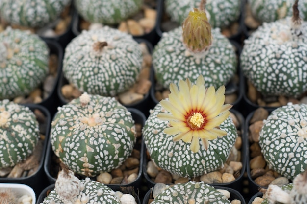 Grupo de cactus en una maceta, planta suculenta.