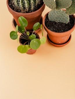Grupo de cactus en macetas.