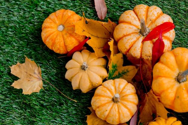 Grupo de calabazas con hojas en césped verde