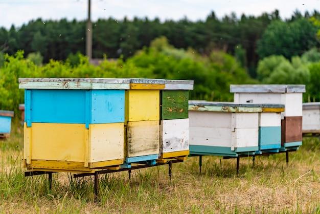 Grupo de colmenas grandes y pequeñas de color para las abejas en el bosque