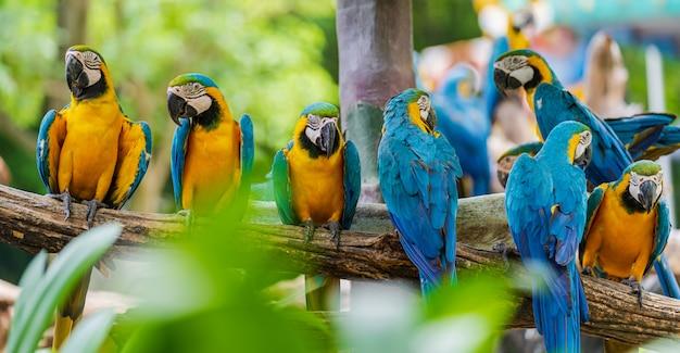 Grupo de colorido guacamayo en ramas de los árboles