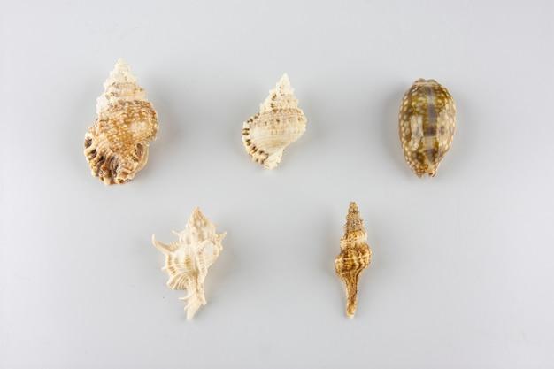 Grupo de conchas marinas