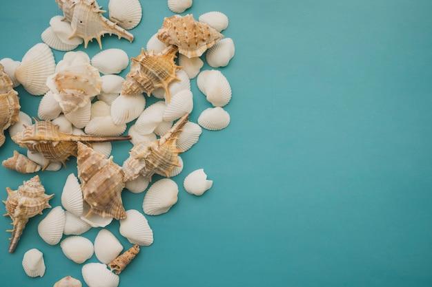 Grupo de conchas sobre fondo azul