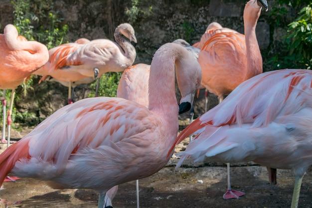Grupo de flamencos en un ambiente exótico.