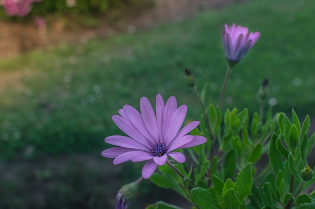 Grupo de flores en el parque o jardín al atardecer