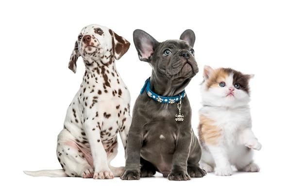 Grupo de gatitos y cachorros sentado aislado en blanco