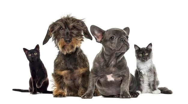 Grupo de gatitos y cachorros sentado, aislado en blanco