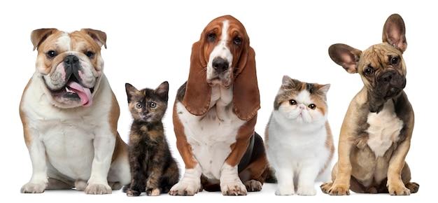Grupo de gatos y perros en frente