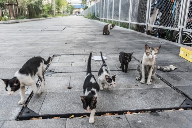 Grupo de lindos gatos callejeros y gatitos