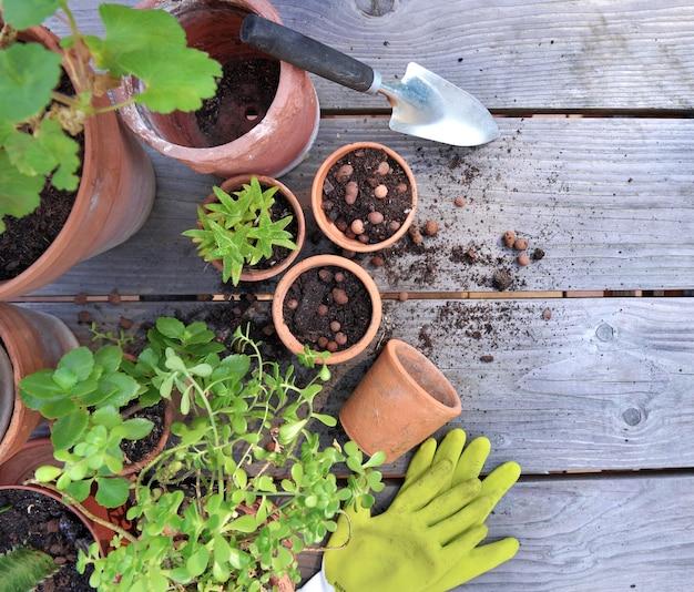 Grupo de macetas de terracota y plantas suculentas en una mesa de jardín