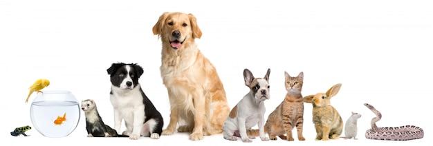 Grupo de mascotas en una fila.