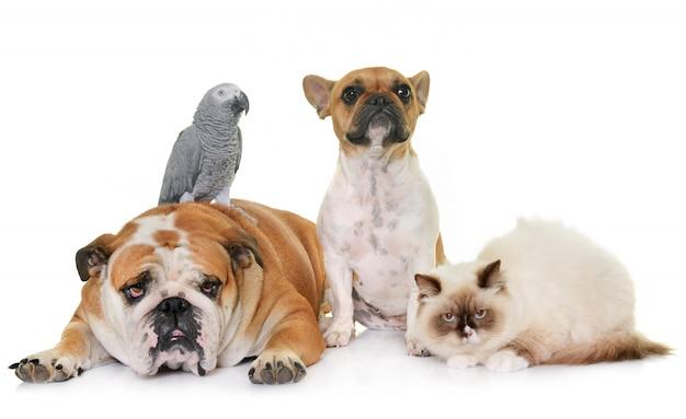 Grupo de mascotas