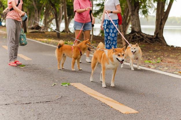 Grupo de mujeres caminando con su perro de raza inu en el parque