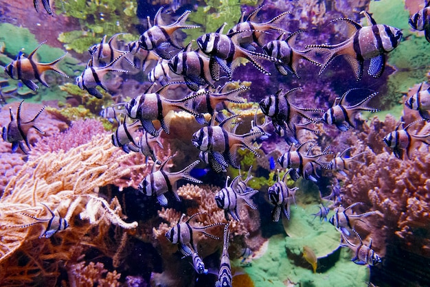 Grupo de peces bajo el agua.