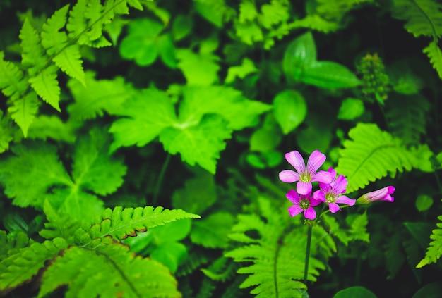 Grupo de pequeñas flores de color rosa brillante en el bosque con follaje de helecho borroso y diferentes hojas verdes