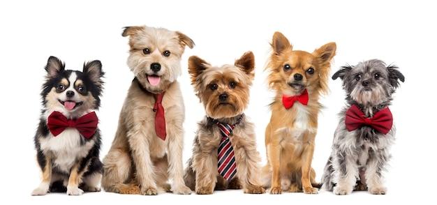 Grupo de perros frente a una pared blanca