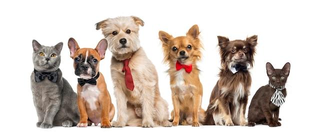 Grupo de perros y gatos delante de una pared blanca