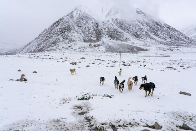 Grupo de perros sin hogar en el norte de la india