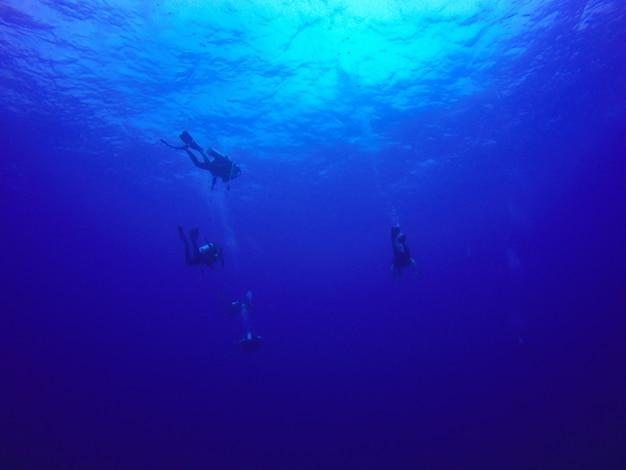 Grupo de submarinistas buceando bajo el agua en el mar.