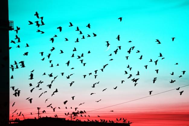 Grupos de pájaros volando sobre el techo al atardecer sobre fondo de luna.