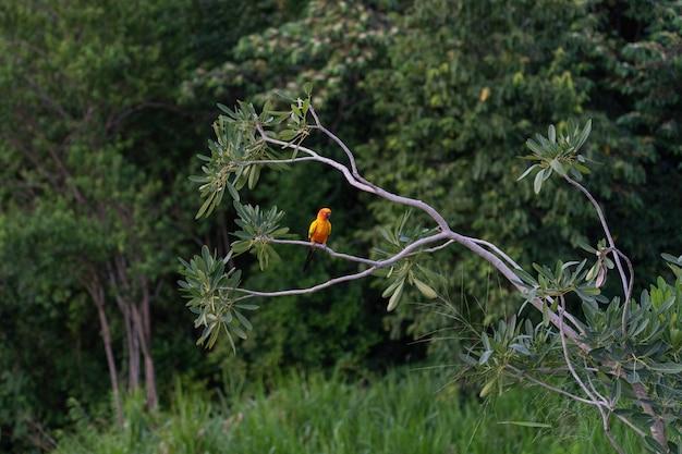 Guacamayo africano en árbol