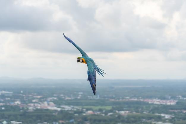 Guacamayo africano volando