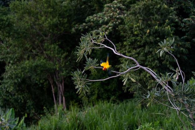 Guacamayo en el arbol