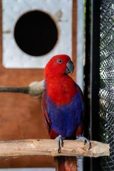 Guacamayo de aspecto lindo en la jaula.