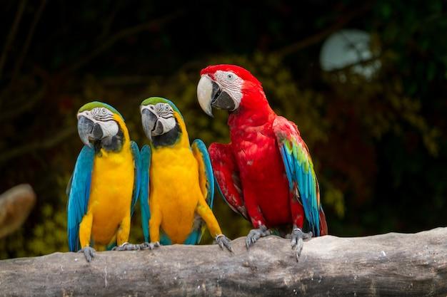 Guacamayo colorido pájaro
