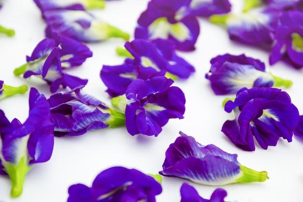 Guisante de mariposa, púrpura sobre fondo blanco. enfoque selectivo
