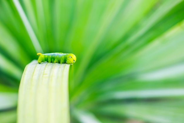 Gusano verde en la hoja