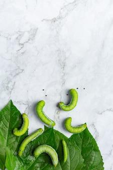 Gusanos verdes con hojas frescas sobre suelo de mármol blanco